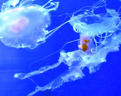 méduses zoo